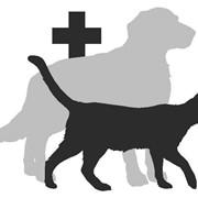 Консультация ветеринара фото