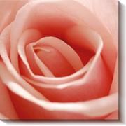 Модульная картина Розы_2 , Неизвестен фото