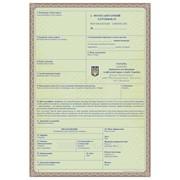 Оформлення фітосанітарного сертифікату (Васильківський, Фастівський р-ни) фото