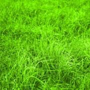 Корма зеленые фото
