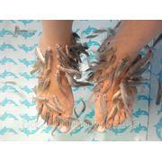 Фиш-спа — процедуры пилинга кожи ног рыбками garra rufa фото