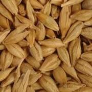 Зерно, зерновые культуры,купить,Украина,Киев фото