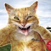 Медицинская помощь для животных фото