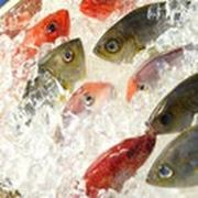 Хранение замороженной рыбы фото