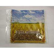 Зерно пшеницы фото