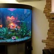 Морские аквариумы, подводный декор, пузырьковые колонны и водопады по стеклу. фото