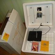 Инкубатор Несушка на 63 Цифровой регулятор, автомат фото
