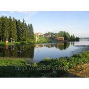 Продажа земельного участка 3,33 га в д. Ельники. Краснослудское с\п. фото