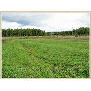 Земельный участок 290 соток в д. Повадино фото