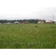 Земельный участок по Ленинградскому шоссе в д. Гончары фото