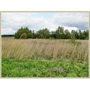 Земельный участок 145 соток в д. Повадино фото