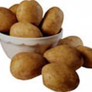 Системы защиты для картофеля фото