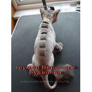 Стрижка кошек. Объемные узоры фото