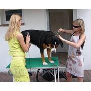 Грумминг собак фото