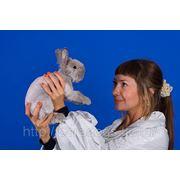 Стрижка кролика фото