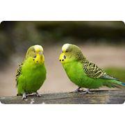 Гостиница для птиц фото