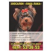 Стрижка собак и кошек в Барнауле фото