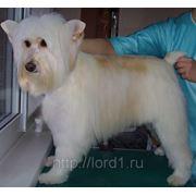 Стрижка собак - метис фото