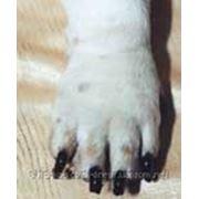 Гигиеническая стрижка собак фото