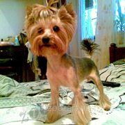 Стрижка собак Москва фото