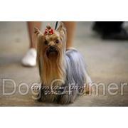 Стрижка собак в Москве. 8-916-190-7234 фото