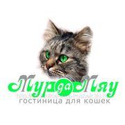 Скидка на проживание 2 кошек одного владельца -25% фото