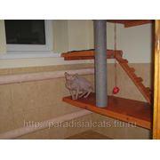 Зоогостиница,гостиница для домашних животных, Астрахань фото