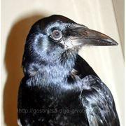 Гостиница для диких птиц фото