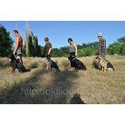 Дрессировка собак всех пород в г. Шахты фото
