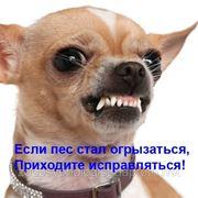 Дрессировка собак с проблемным поведением фото