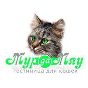 Скидка на проживание 4 кошек одного владельца- 37,5% фото
