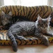 Зоогостиницы и услуги для домашних животных фото