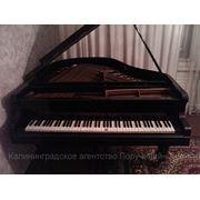 Настройка, ремонт, перевозка, оценка, подбор пианино и роялей фото