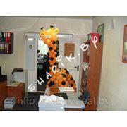 Жирафик фото