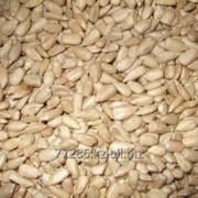 Подсолнечник, Ядро семян подсолнечника масличные сорта фото