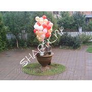 Букетик из шаров с гелием фото