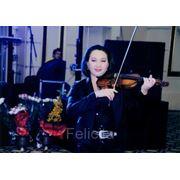 Эстрадная скрипка фото