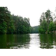 Отдых в лесу фото