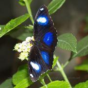 Живые бабочки для подарков и праздников круглый год! фото