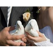 Белые голуби на свадьбу фото