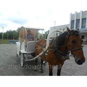 Катания на лошадях фото