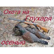 Охота на Глухаря осенью фото