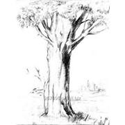 Дерево жизни фото
