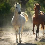 Продукция ветеринарного назначения для лошадей Лактобифадол фото