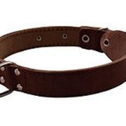 Ошейник для собак Lion кожаный двойной с кольцом посередине без украшения (ширина 20см) фото