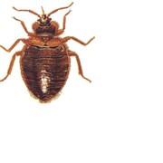 Эффективное уничтожение клопов и других насекомых в квартирах, бытовках, офисах, производственных помещениях. Работы выполняются 24 часа, без выходных. Выезд в день обращения. фото