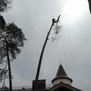 Спил деревьев аварийных.Киев фото