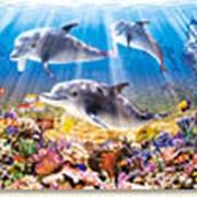 Пазл Castorland 500 деталей Дельфины, средний размер элементов 1,9?1,7 см фото