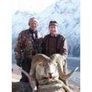 Организация охотничьих туров фото