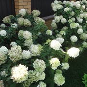 12. Создание цветников и миксбордеров фото